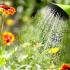Cómo sobreponerse al polen
